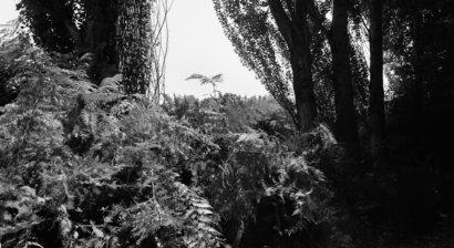 Alain Ceccaroli, Photographie Besançon les Amis